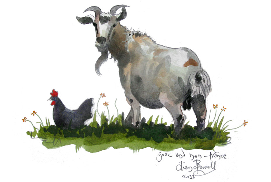 watercolour painting of  A goat and hen in Luz-St-Sauveur
