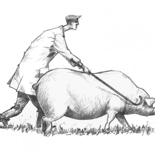 Drawing of a pig show