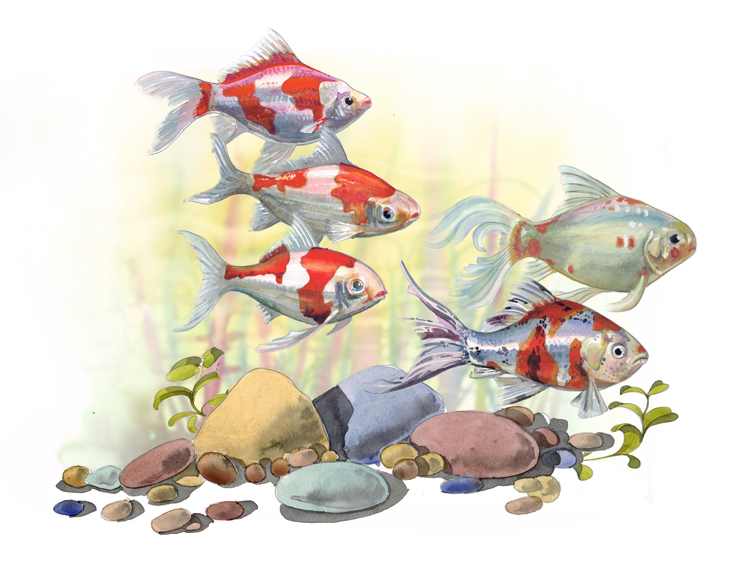 A painting of Coldwater fish