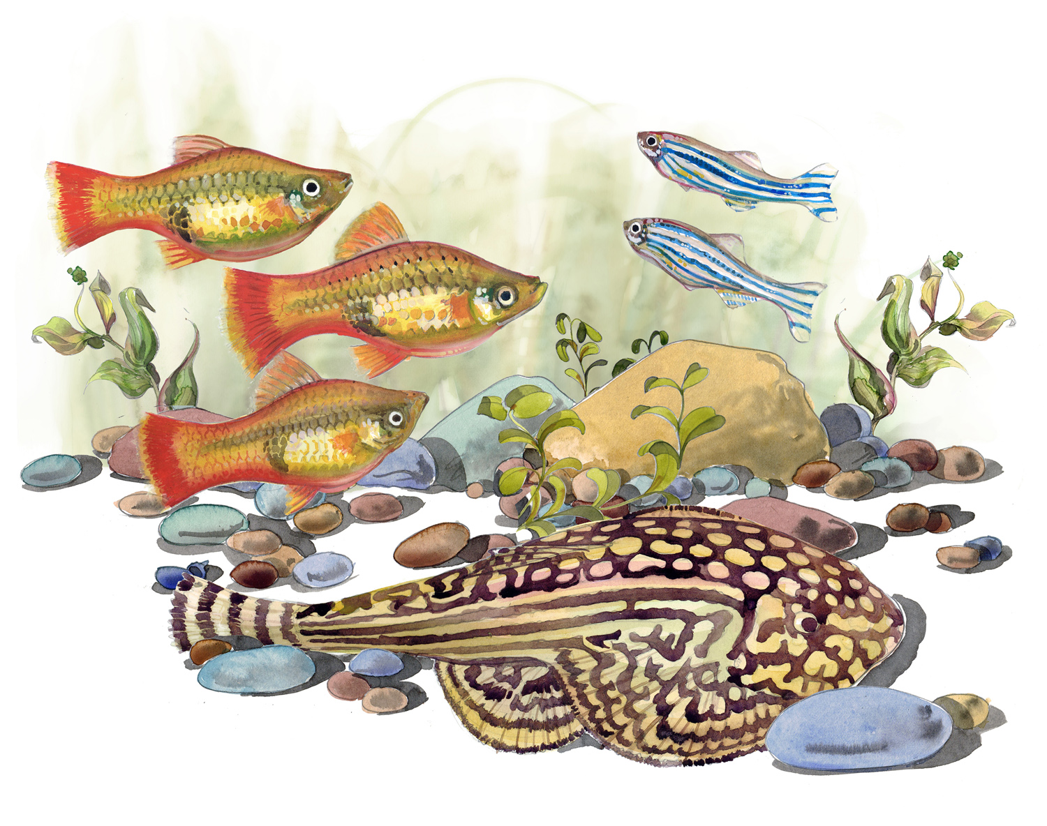 A painting of Temperate fish