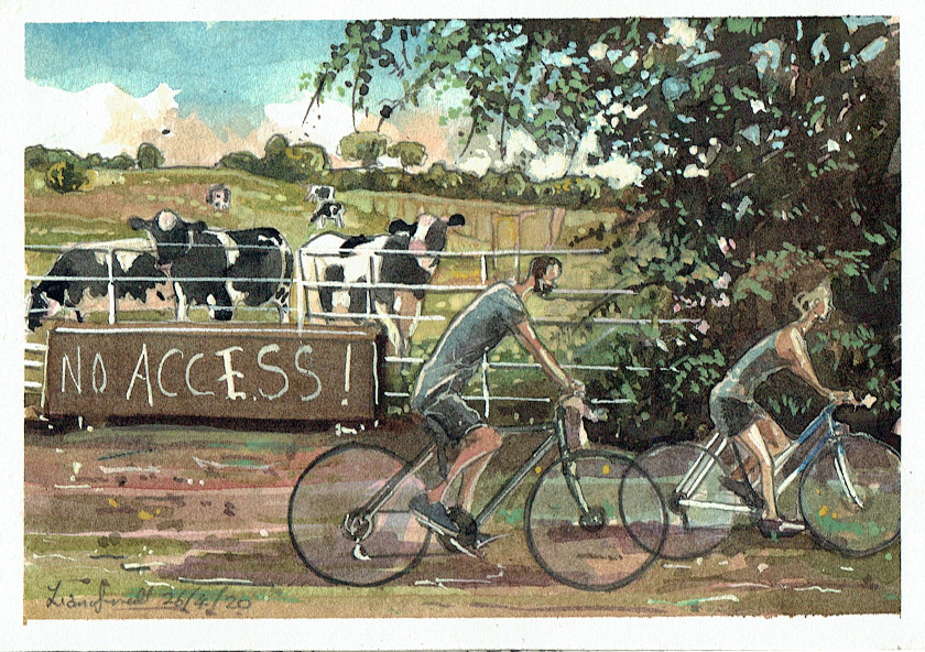 Painting of cows and cyclists in Pilton somerset