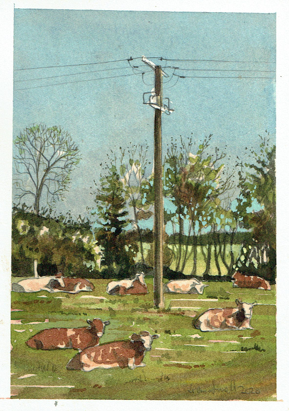 Painting of cows in Pilton somerset