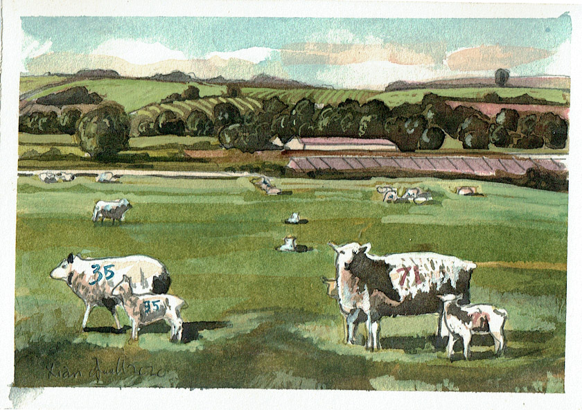 Painting of sheep in Evercreech somerset