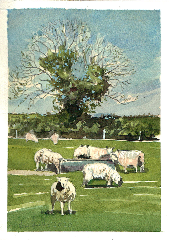 Painting of sheep in Pilton, Somerset